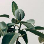 Prachtig citroenboompje